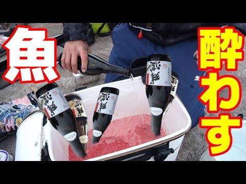 [検証]魚に酒飲ませたら、簡単に釣れるんじゃないか?