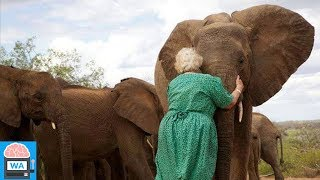 Diese Frau rettete 140 Elefanten das Leben! I Wissensautomat