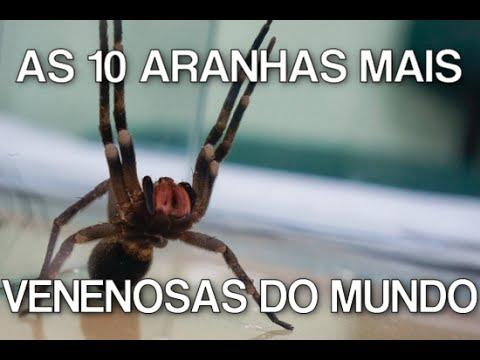 Conheça as mais perigosas aranhas do mundo...