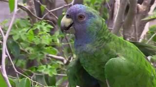'Hiking an Island Reborn' - Dominica Film Challenge 2018 Video