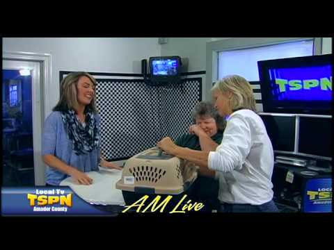 Amador County Animal Control John Vail On Am Live July 9 2014 Youtube