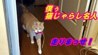猫だいずが猫じゃらしで一人遊びしてるだけ! の退屈な動画ですよ(^▽...