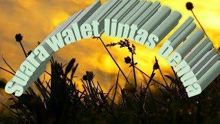 Download Lagu SUARA WALET PANGGIL SP KALIZER 18 JT mp3