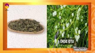 Tıbbi Bitkiler - Ökse Otu Faydaları - TRT DİYANET
