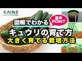 カインズ野菜図鑑 キュウリの育て方 の動画、YouTube動画。