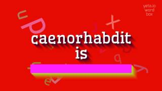 how to say caenorhabditis high quality voices