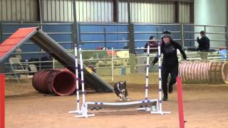 Fun At The Dog Agility Course