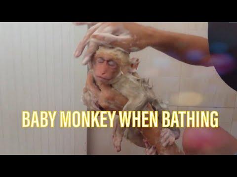 BABY MONKEY & DOG - HAPPY MOMENTS OF THE BABY MONKEY WHEN BATHING