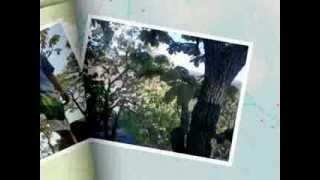 """Huaxtla Jalisco """"Bosque de la Primavera"""