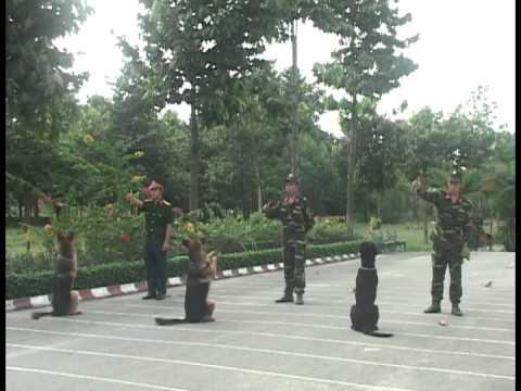 Huấn luyện chó nghiệp vụ quân đoàn 4
