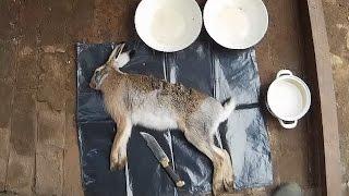 Как снять шкуру с зайца не подвешивая за ноги