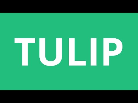 How To Pronounce Tulip - Pronunciation Academy