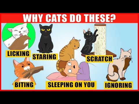 Download The Meaning Behind 14 Strangest Cat Behaviors | Jaw-Dropping Facts about Cats