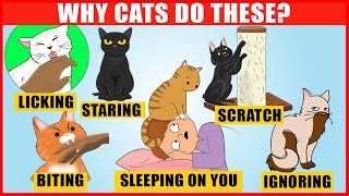 The Meaning Behind 14 Strangest Cat Behaviors | JawDropping Facts about Cats