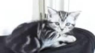 Blog 「ちびグーグーだって猫である」 http://happy.ap.teacup.com/gou-...
