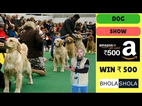 Pet Care - Dog Show - Bhola Shola