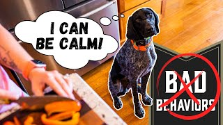 Calm Down Your Dog In Minutes