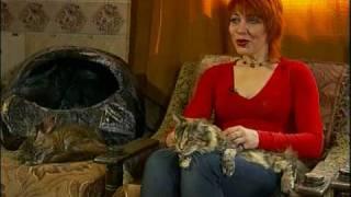 Самые большие коты в мире. Порода Мейн Кун (Maine Coon cats)