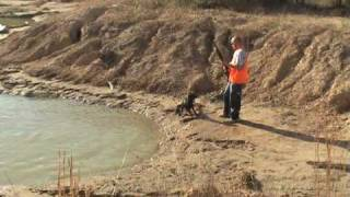 Jill, Ball Drive - Labrador Retriever Training For Duck Hunting