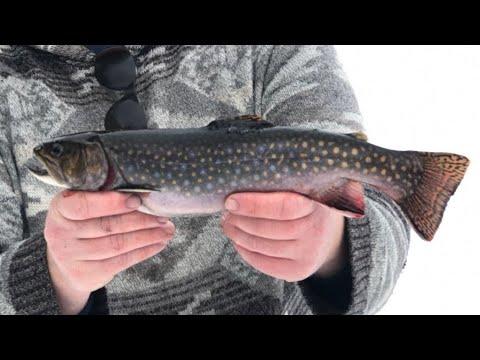 Ice Fishing Remote Backlake Brookies Of Northern Ontario!