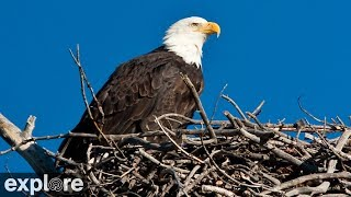 Sauces Bald Eagle - Channel Islands National Park Cams powered by EXPLORE.org thumbnail