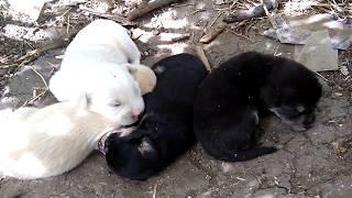 Маленькие щенки наелись и спят, во сне они быстрее растут