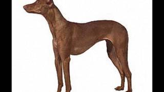 http://www.pets4you.com/dogs.html Quality Puppies available at Pets...