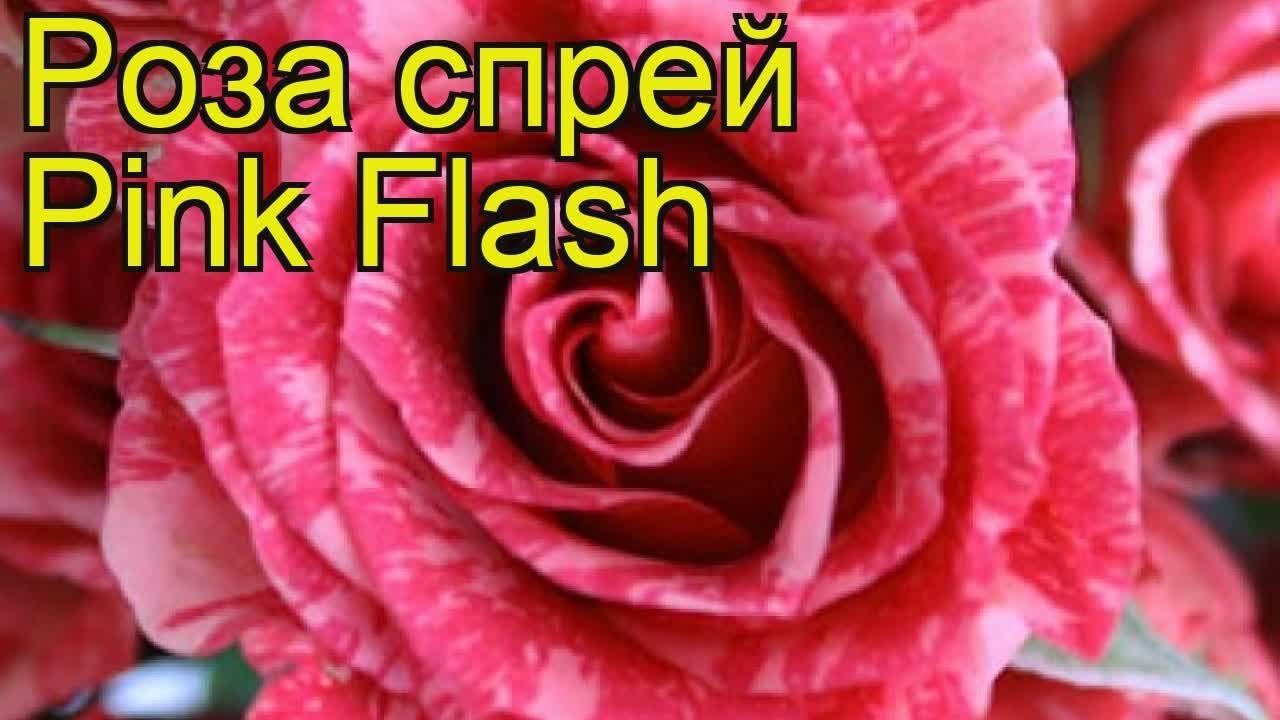 Покупки в интернет магазине У Люсиль + обзор набора Винтажные розы .