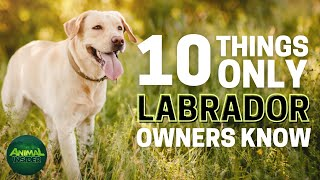 10 Things Only Labrador Dog Owners Understand