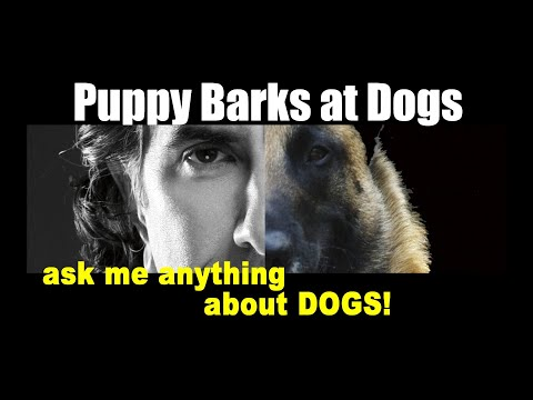 My Puppy Always Barks at Other Dogs - ask me anything - Dog Training Video