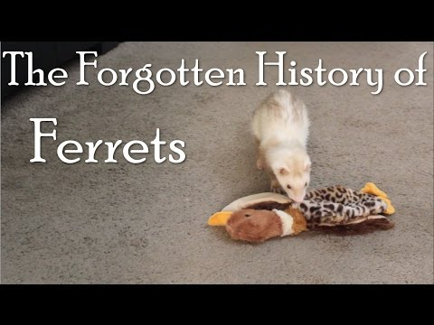 The Forgotten History of Ferrets