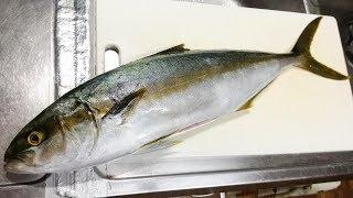 9月のはじめ、素潜りで魚を捕りに行きました。 海の様子も少し変わって...