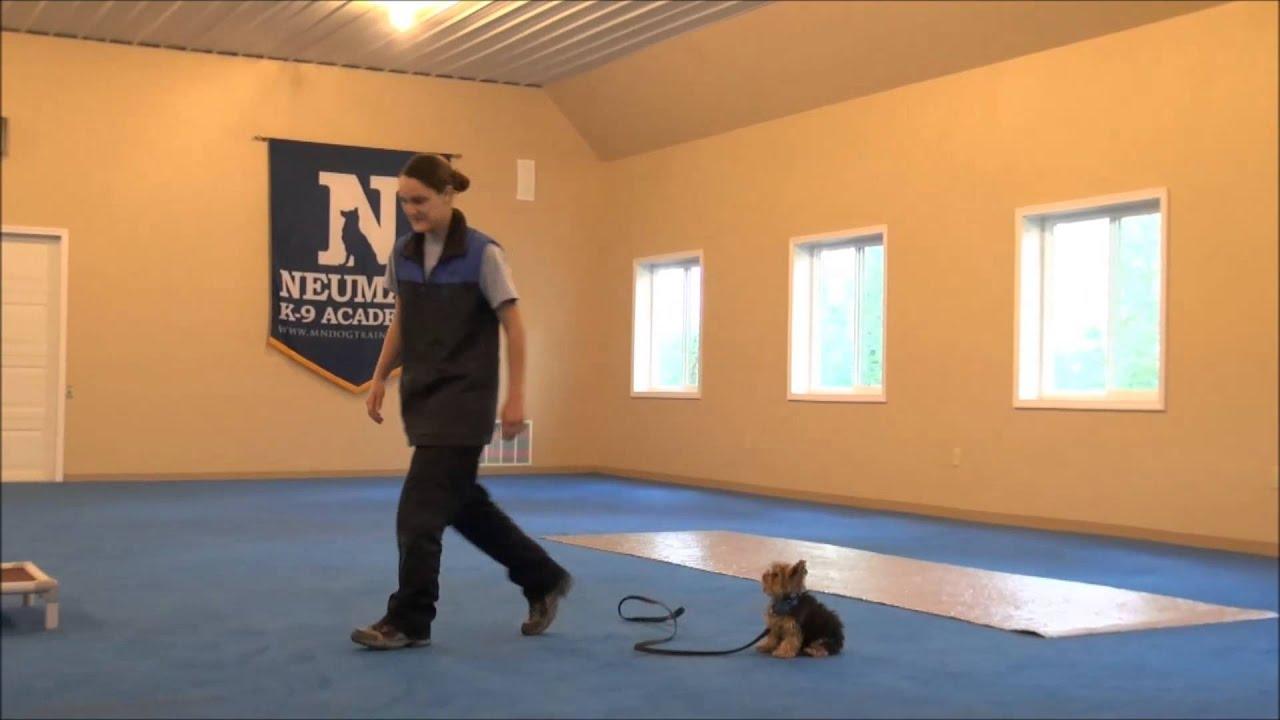 Dog Boot Camp Training Uk
