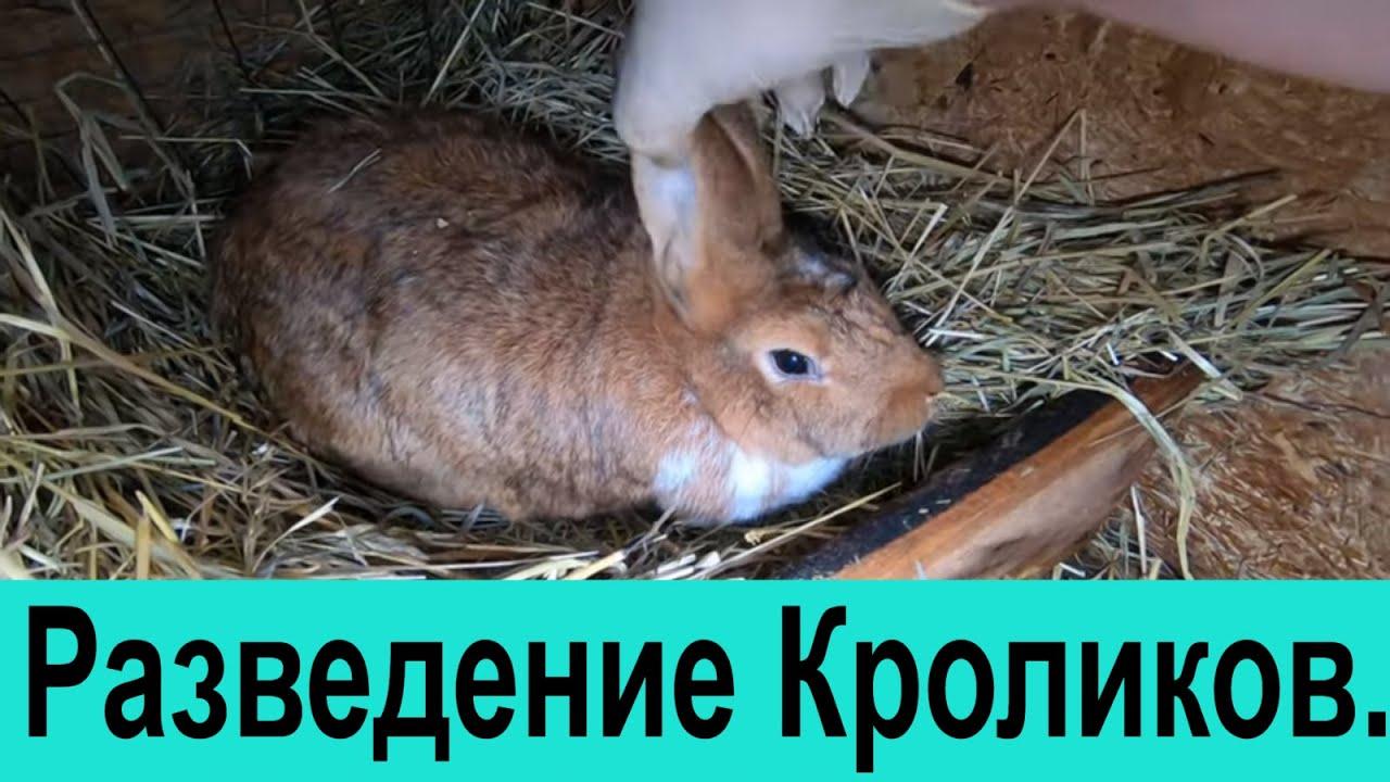 Разведение кроликов.