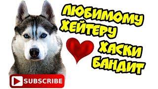 DOGVLOG: ХАСКИ ПРОТИВ ХЕЙТЕРОВ. Поющие собаки. Хаски Бандит