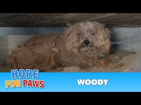 Thumbnail: When the dog's owner died, he was left behind. Watch what happens next! Please share