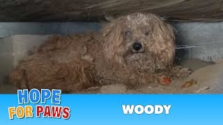 When the dog's owner died, he was left behind.  Watch what happens next!  Please share thumbnail