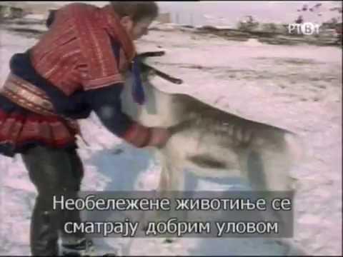 Celebrations (40): People of the reindeer (Sami people) (eng/ser)