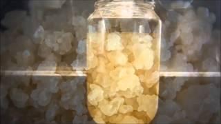 МОРСКОЙ РИС/ рисовый грибок TIBICOS
