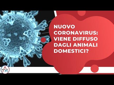 Nuovo Coronavirus: Viene Diffuso Dagli Animali Domestici?