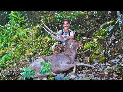Hunting Rusa deer in New Caledonia part 38