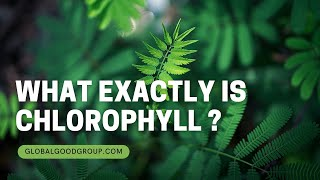What Exactly is Chlorophyll an…