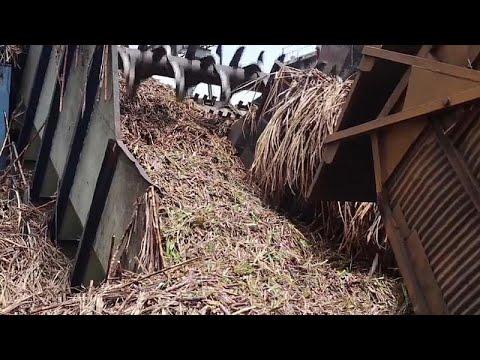 فيديو: تعرف على الجزيرة التي استبدلت قصب السكر بالنفط!  - نشر قبل 2 ساعة