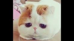 Kuppi kissa