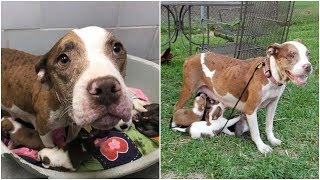 Mama dog surrendered to a shelter after giving birth she fought to save her puppies