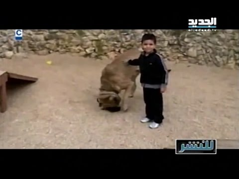 d17540002d008  للنشر مع ريما كركي  كلب يأكل رأس طفل والحقيقة الكاملة على لسان الأهل -  YouTube