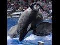 Tilikum barges into Gate #1 - Aug 14 2015 - SeaWorld Orlando