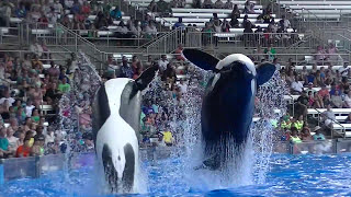 Tilikum barges into Gate #1 - Aug 14 2015 - SeaWorld Orlando