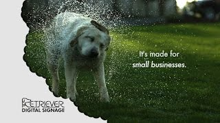 Digital Signage: Made For Small Business Funny Dog Video