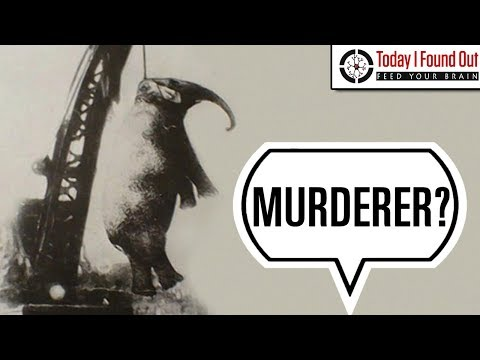 That Time an Elephant was Condemned to Execution by Hanging
